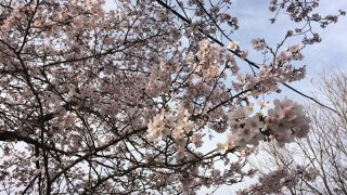 2017年4月分の電気料金(オール電化)