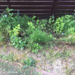 家庭菜園シーズン到来♪いろいろと植えたいけれど・・・