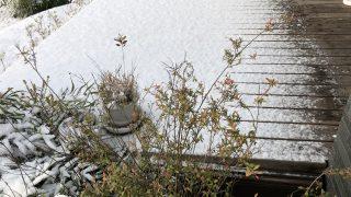 雪だと屋根もたいして役に立たないなぁ