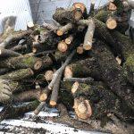 【薪活2018】先日の残りの柿の木で2車目、そして今の薪の状況