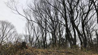【薪活2018】1年ぶりの宝の山で3車目。