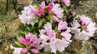 知らないうちに色々と咲きはじめた庭の花