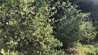 花より団子♪庭に植えるならやっぱり果樹がいいな〜。