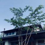 シンボルツリー選びって難しい。センスを感じる樹形と普通に綺麗な樹形。