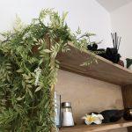 本物の観葉植物とフェイクグリーンは上手に選んでいきたい。