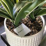 セールで購入♪フランフランのフェイクグリーンと造花。