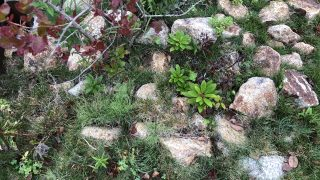 【外構トラブル】芝生の侵食は続くよどこまでも〜(;_;) 緑化さんの対応その2。