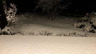 雪積もった〜〜!